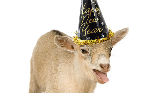 party-goat